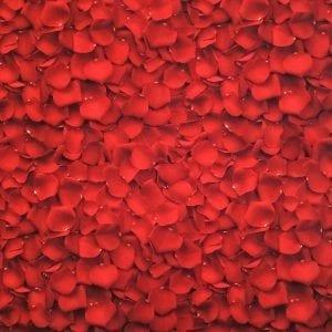 Red rose petal fabric printed on Carvico VITA recycled fiber print base.