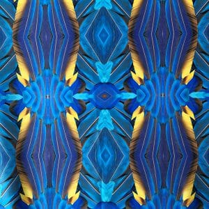 Feather Print Swimwear Fabric - Royal blue macaw feather print