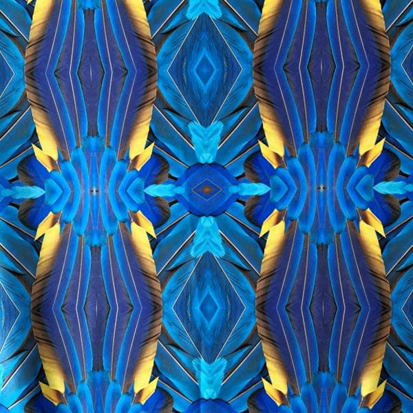 Feather Print Swimwear Fabric - Royal blue macaw feather print